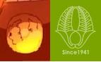 柳川高校の校章と煉獄杏寿郎、煉獄家の家紋