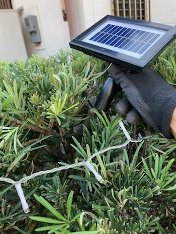 太陽光パネルを木の枝の切り口に直接設置